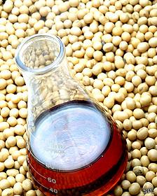 Frijoles o porotos de soja junto a una botella con aceite refinado