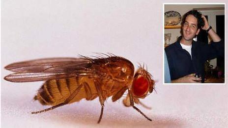 Dr Barry Denholm , experto en moscas.