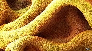 Superpegamento visto con un microscopio de electrones
