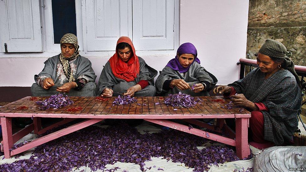 Mujeres limpiando el azafrán