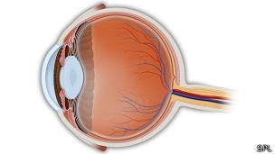 Imprimen células del ojo con una impresora de inyección