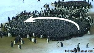 Estudio sobre pingüinos emperadores