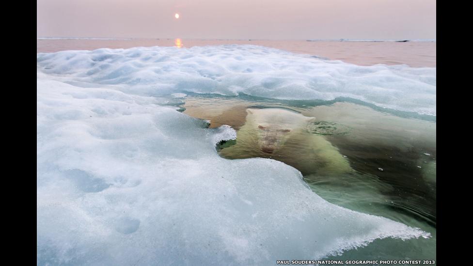 O Urso de Gelo, de Paul Souders