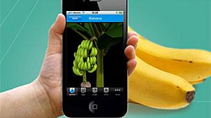 """App """"Taggie"""" que identifica aquí bananos"""