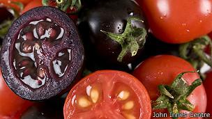 Comida envenenada. Agrotóxicos, transgénicos, transnacionales... 140125031325_sp_tomates_morados_304x171_johninnescentre