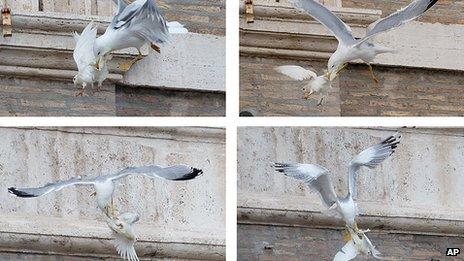 Montaje del ataque a las palomas