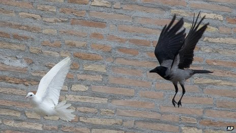 Un cuervo persigue a una paloma