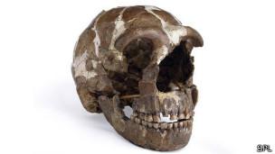 cráneo de hombre Neandertal