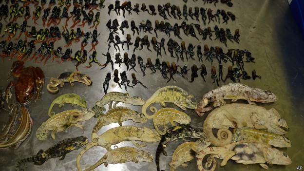 Animais encontrados em aeroporto sul-africano (AP)