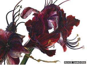 140214145335 feynman flores rosie sanders El conocimiento, ¿impide apreciar la belleza?   BBC Mundo   Noticias
