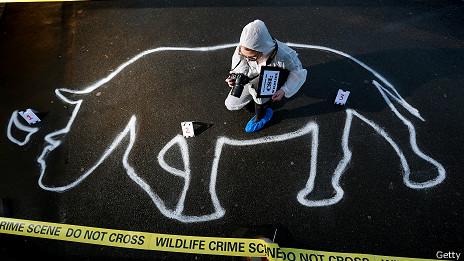 Escena del crimen / cuerno de rinoceronte