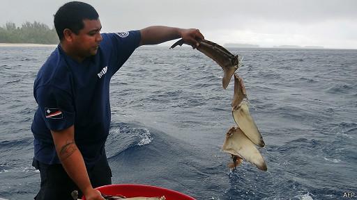 pesca tiburones