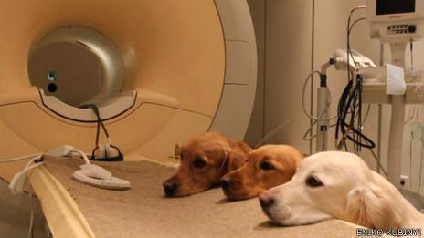 Perros en escáner