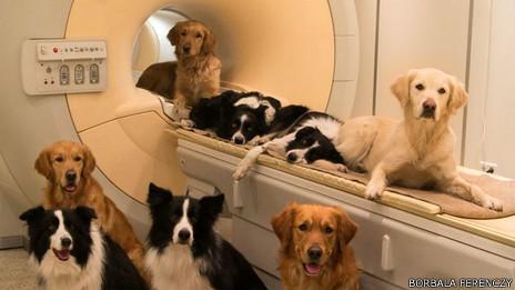 Perros en un escáner