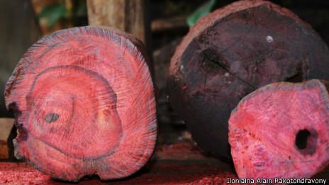 Contrabando de palo de rosa