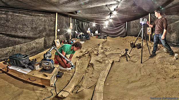 Análise de fósseis em Cerro Ballena/Foto: Instituto Smithsonian