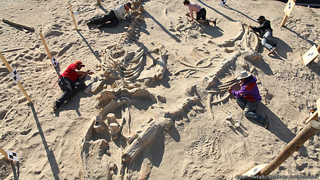 Análise de fósseis em Cerro Ballena/Foto: Adam Metallo/ Instituto Smithsonian