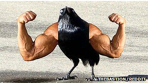 Montaje de un ave con brazos humanos