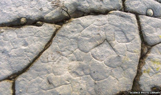Piedra caliza y fósiles