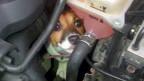 Cachorrinha fica presa em motor de carro | Crédito: BBC