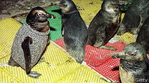 pinguino_con_sweater