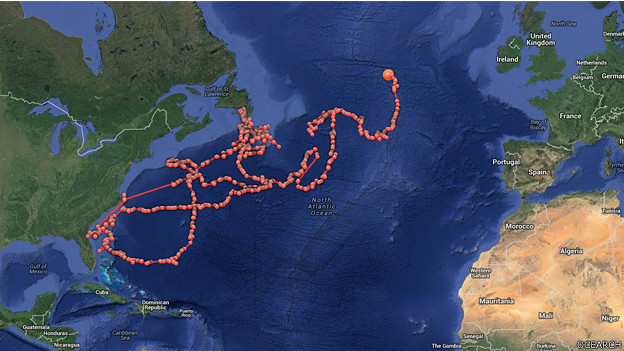 Mapa de Ocearch con el recorrido del tiburón Lydia