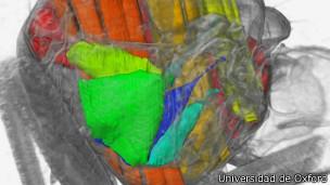 Imágenes en 3D del tórax de una mosca