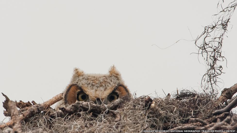 """Ку-ку"". Фото Грэхэма Макджорджа/National Geographic Traveller"