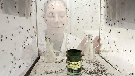 Mosquito que transmite el dengue