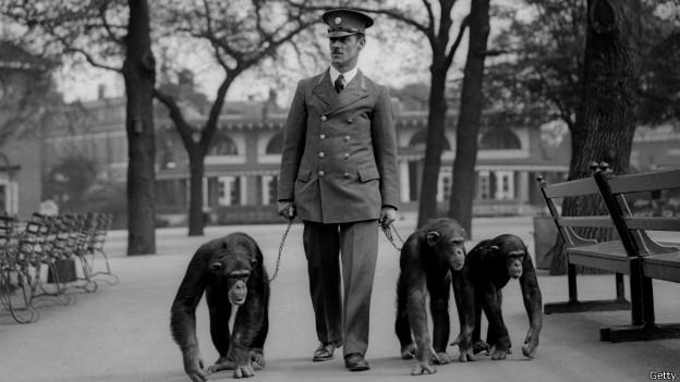 Guardia con chimpancés en Londres