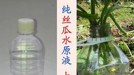 Una botella de agua y plantas. Cortesía: Wang Xiafeng