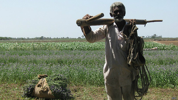 गुजरात का किसान