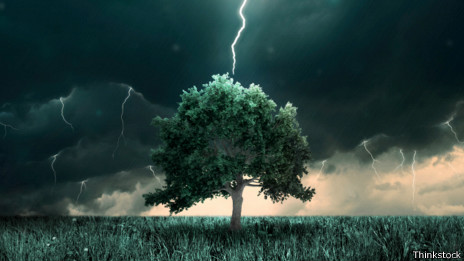 Rayo en un árbol