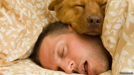 Perro dormido con su dueño