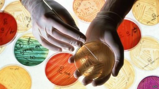 устойчивые микроорганизмы