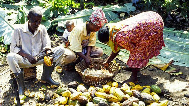 Cultivadores de cacao en Ghana