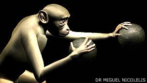 Avatar o representación gráfica de un primate Imagen cortesía de Duke University