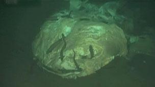 Carcaça de tubarão-baleia foi uma das encontradas em área pequena no fundo do mar (BBC)