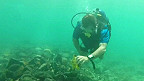 Подводный поиск флагмана Колумба