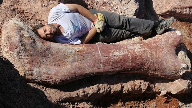 Paleontólogos argentinos aseguran haber descubierto el dinosaurio más grande del mundo 140517015150_sp_dinosaurio_624x351_bbc
