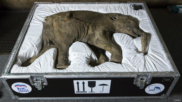 Lyuba,el  bebé mamut