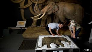 Lyuba, la bebé mamut, en el Museo de Historia Natural