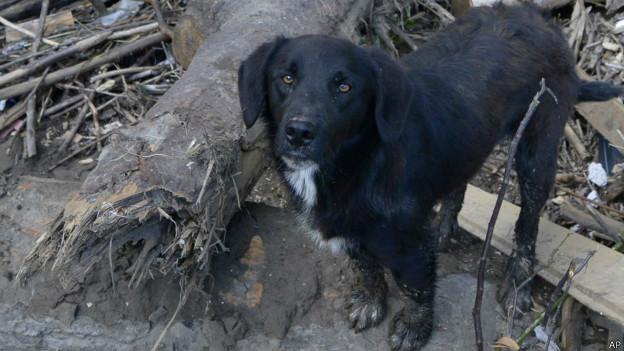 Cachorro abandonado após enchentes na Bósnia (AP)