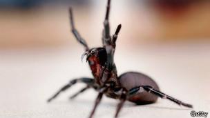 Araña de embudo