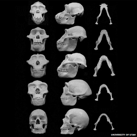 Huesos de los ancestros humanos