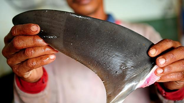 Aleta de tiburón