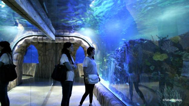 Acuario subterráneo en Ciudad de México. Foto cortesía Tatiana Vallejo