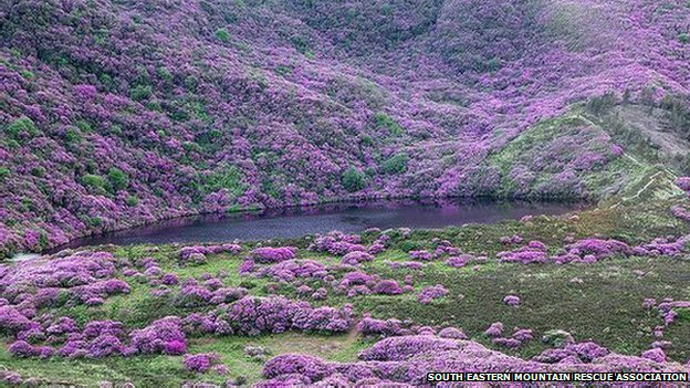 http://wscdn.bbc.co.uk/worldservice/assets/images/2014/06/18/140618091052_rhododendron_promo_624x351_semra_nocredit.jpg