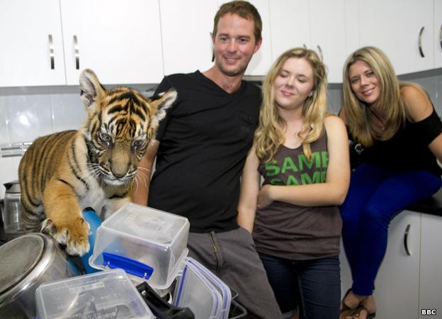 Tigres del zoológico de Australia
