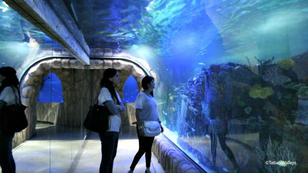 Aquário subterrâneo na Cidade do México (BBC)